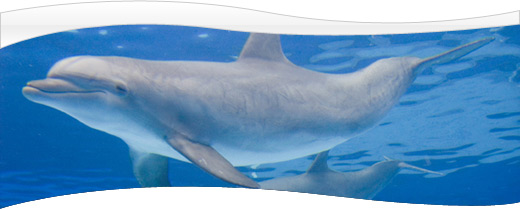 swim-with-dolphins1